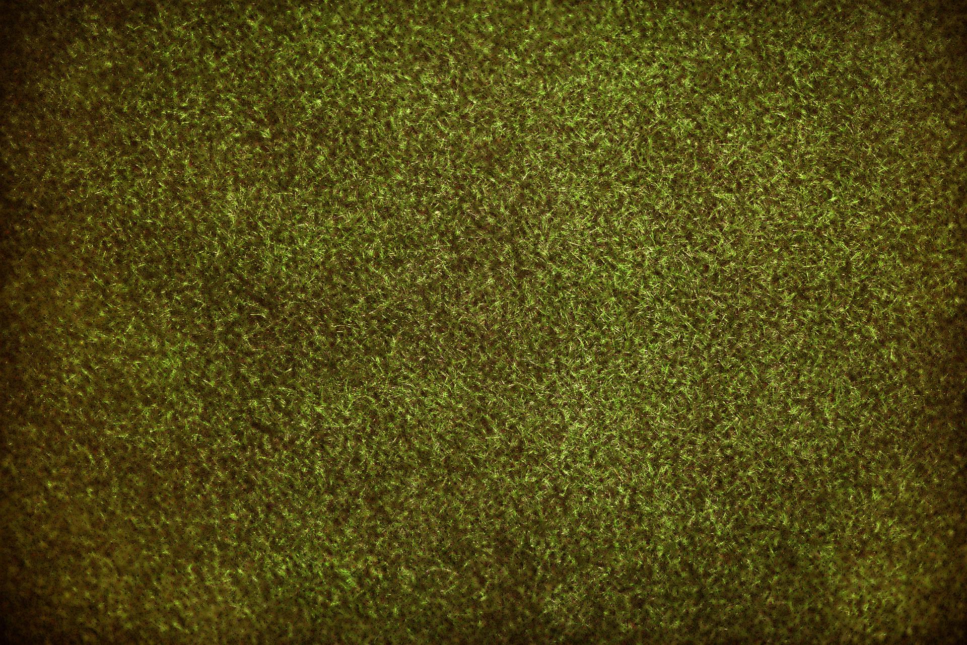 grass-3253361_1920 (1)